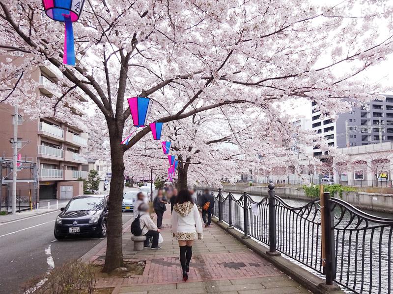 大岡川の桜花見