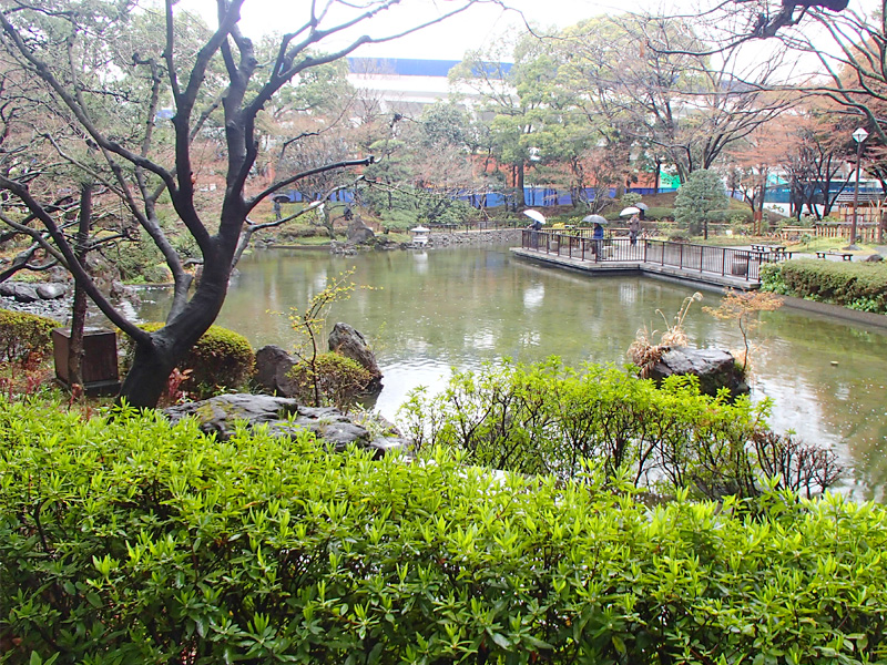 オープン戦が中止になったので横浜公園で小さな春を見つけて来た